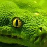 Green3mey